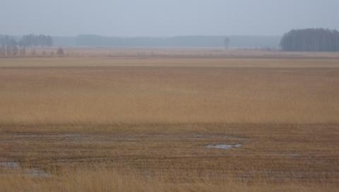 500 hektar tækkerør
